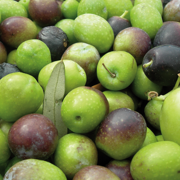 foto di olive